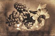Martina Fagan - Muscari and Daffodils