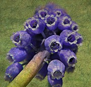 Layer Prints - Muscari with Distressed Finish Print by Chris Berry