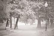 Museum Park Fog Print by Trish Tritz
