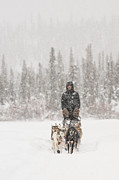 Dog Sled Posters - Mushing Through a Snow Storm Poster by Tim Grams