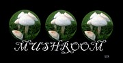 Mushroom Digital Art - Mushroom Art Collection 2 by Saribelle Rodriguez by Saribelle Rodriguez