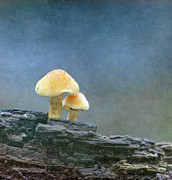 Mushroom Metal Prints - Mushrooms Metal Print by Angie Vogel