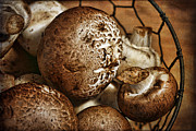Cindi Ressler - Mushrooms