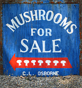 Blue Mushroom Posters - Mushrooms For Sale Poster by Dave Mills