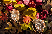 Fungi Digital Art - Mushrooms in Fall Leaves by Kathleen Bishop