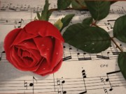 Musical Rose Print by Sid Ball