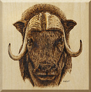 Wood Burning Pyrography Prints - Muskox Print by Ron Haist