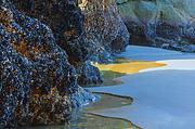 Pacific Northwest Photos - Mussel Encrusted Rocks by Dee Browning