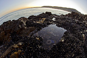 Seascape Photos - Mussels and Friends by Aaron S Bedell