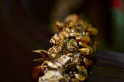Healthy Originals - Mussels on a rope by Tommy Hammarsten