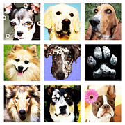 Boston Digital Art Metal Prints - Must Love Dogs 2 - Cute Fun Fur Babies Art Metal Print by Sharon Cummings