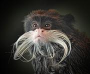 Mustached Monkey Emperor Tamarin IIi  Print by Jim Fitzpatrick