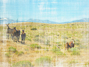 Equine Art Artwork Prints - Mustang gang  Print by Mayhem Mediums