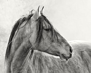 Equine Photography Photos - Mustang by Ron  McGinnis