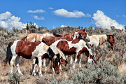 Stud Digital Art - Mustangs roaming free by Kathleen Bishop