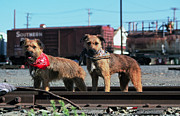 Border Photo Originals - Mutt Dogs Twin Hobos by Kathy Sidjakov