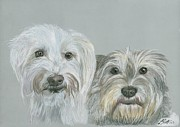 Dogs Drawings - Mutts by Laurie Scott