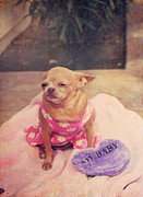 Chihuahuas Posters - My Baby Poster by Laurie Search