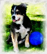 Collie Digital Art Posters - My Ball Poster by Barbara  Sellers
