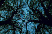Nightmare Man Prints - My Blue Dark Forest Print by Stylianos Kleanthous