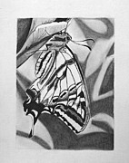 Oregon Drawings - My butterfly by Teri Schuster