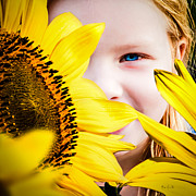 Sunflower Photograph Posters - My Childhood Garden Poster by Bob Orsillo