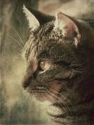Photo Of Cat Framed Prints - My Darling Cat Mosey Framed Print by Anne Macdonald