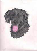Mutt Drawings - My dog Diego by Danita  Higham