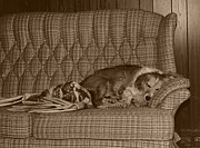 Cuddly Prints - My Dog Sleeping On The Couch Circa 1976 Print by ImagesAsArt Photos And Graphics