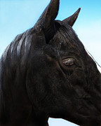 Dark Gray Prints - My Favorite Horse Face Print by Terril Heilman