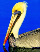 Pelicans Framed Prints - My Friend Pelli Framed Print by Karen Wiles