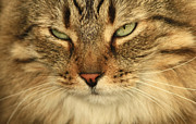 My Friend Photos - My Friends Cat by Inspired Nature Photography By Shelley Myke