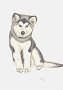 Husky Drawings Metal Prints - My Husky Puppy-Misty Metal Print by Patricia Hiltz