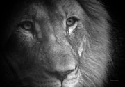 Canvas  Black And White Cat Photos - My Lion Eyes by Thomas Woolworth
