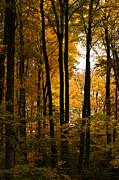 Linda Knorr Shafer - My Love For October