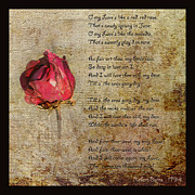 Liz  Alderdice - My Love is Like a Red Red Rose