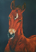 Horse Images Pastels Framed Prints - My lovely foal Framed Print by Dorota Zdunska
