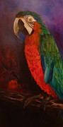 Parrot Print Paintings - My Macaw by Jenny Lee
