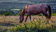 Grazing Horse Photo Posters - My name is Horse Poster by Ian Hufton