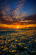 Phil Koch - My Own Kind of Paradise