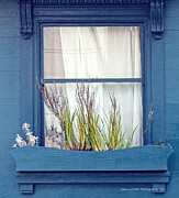 Author and Photographer Laura Wrede - My San Francisco Window...