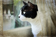 Cats Photos - My View by Fraida Gutovich