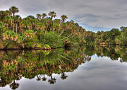 Gerald Adams - Myakka River reflection