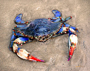 Jeff McJunkin - Myrtle Beach Blue Crab