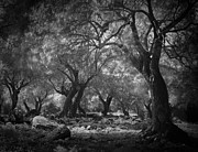 Nightmare Framed Prints - Mysterious Dark Forest Framed Print by Dirk Ercken