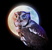 Angela Waye Prints - Mysterious Owl Animal at Night with Full Moon Print by Angela Waye