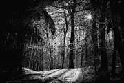 Mystic Forest Print by Marina Likholat