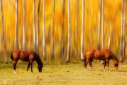 James BO  Insogna - Mystic Horses
