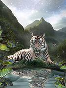 Mystic Tigress Print by Alixandra Mullins