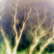 Abstract.trees Digital Art Prints - Mystic trees inverted Print by Sharon Lisa Clarke